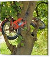 A Bike Growing In A Tree Canvas Print