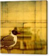 A Bird In New Orleans Canvas Print