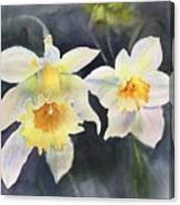 A Bit Of Spring Canvas Print