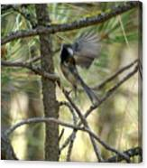 A Black Capped Chickadee Taking Off Canvas Print