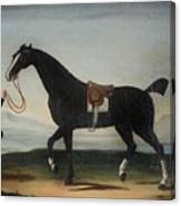 A Black Horse Held By A Groom Canvas Print