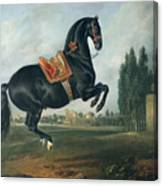 A Black Horse Performing The Courbette Canvas Print