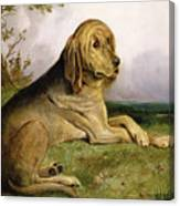 A Bloodhound In A Landscape Canvas Print