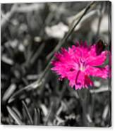A Bloom Of Color Canvas Print