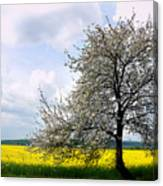 A Blooming Tree In A Rapeseed Field Canvas Print