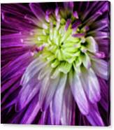 A Bloom's Unfolding Canvas Print