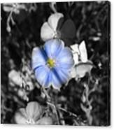 A Blue Flax Special Canvas Print