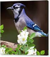 A Bluejay Bouquet Canvas Print