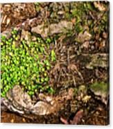 A Bowl Of Greens Canvas Print
