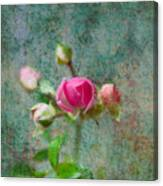 A Bud - A Rose Canvas Print