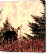 A Bull Moose Dream Canvas Print