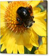 A Bumble Canvas Print