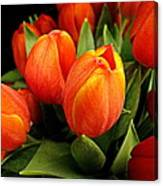 A Bunch Of Tulips Canvas Print