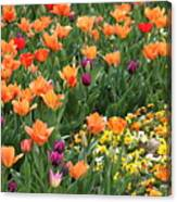 A Burst Of Spring Color Canvas Print