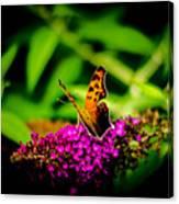 A Butterflies World  Canvas Print