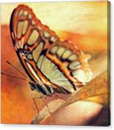 A Butterfly On A Leaf  Canvas Print