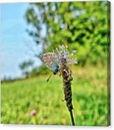 A Butterfly On A Luminous Shining Meadow Canvas Print