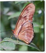 A Butterfly With Closed Wings Canvas Print