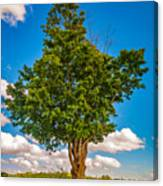 A Canadian Tree Canvas Print
