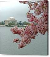 A Capital Cherry Blossom II Canvas Print