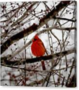 A Cardinal In Winter Canvas Print