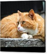 A Cat Named 'kitty' Canvas Print