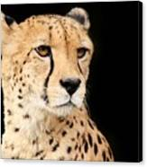 A Cheetah Named Jason Canvas Print
