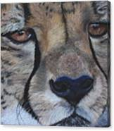 A Cheetah Canvas Print