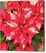A Christmas Flower Canvas Print
