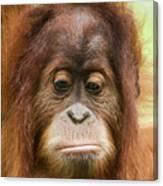 A Close Portrait Of A Sad Young Orangutan Canvas Print