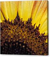 A Close-up Detail Of A Sunflower Head Canvas Print
