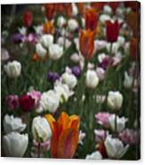 A Cluster Of Tulips Canvas Print