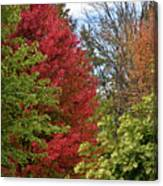 A Collection Of Fall Colours Canvas Print