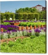 A Corridor Of Purple Sage Flowers And Stachys Lanata Sunlit Canvas Print