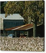 A Cotton Field Surrounds A Small Farm Canvas Print