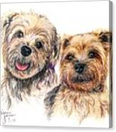 A Couple Of Yorkies Canvas Print