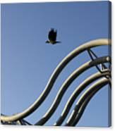 A Crow In Flight, Arhus, Denmark Canvas Print