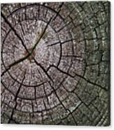 A Cut Above - Patterns Of A Tree Trunk Sliced Across Canvas Print