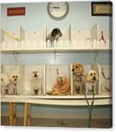 A Day At The Doggie Day Spa Canvas Print
