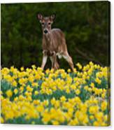 A Deer And Daffodils IIi Canvas Print