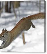 A Devil Named American Red Squirrel Canvas Print