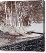 A Different World #1. Groove Of Trees Canvas Print