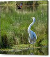 A Disagreement At The Pond Canvas Print