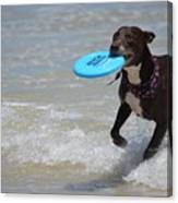 A Dog And Her Frisbee Canvas Print