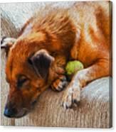A Dog And His Tennis Ball Canvas Print