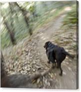 A Dog Backpacking On Pine Ridge Trail Canvas Print