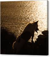 A Dogs View Canvas Print