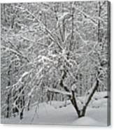 A Dogwood Sleeps While The Snow Falls Canvas Print