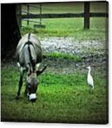 A Donkey And His Bird Canvas Print
