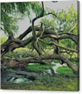 A Dramatic Change Of Perspective Canvas Print